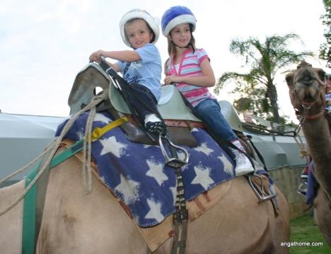 rd to bethlehem camels
